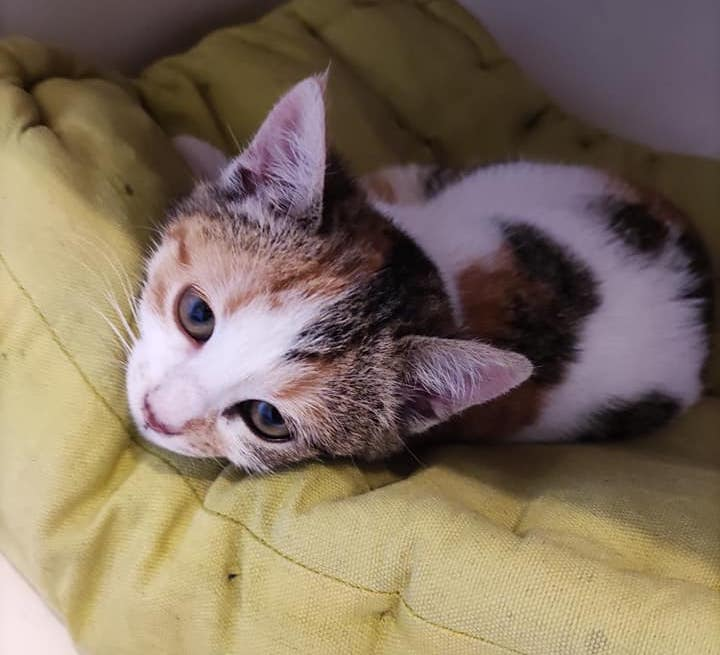 Adopter Un Chaton Liste Des Chatons A Adopter Chez Updm